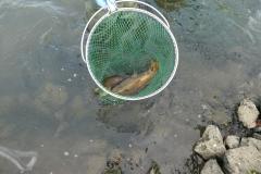 Abfischen r Hintergraben 6