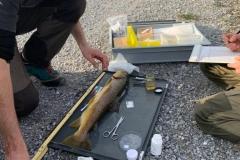 Abfischen r Hintergraben Erhebung 1