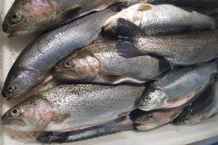 Fischverkauf21_13